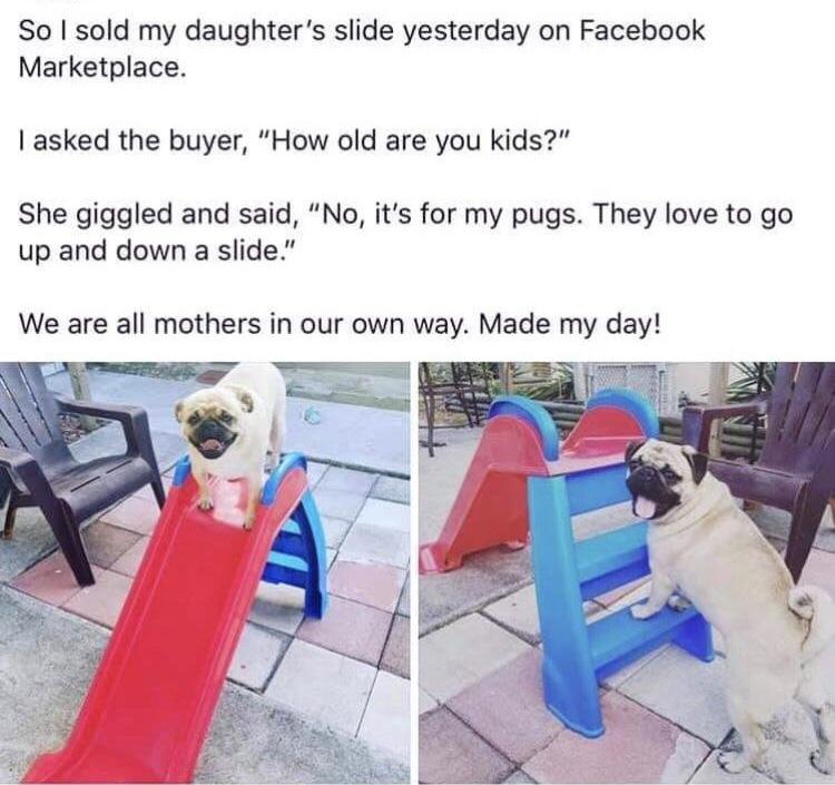 pug slide