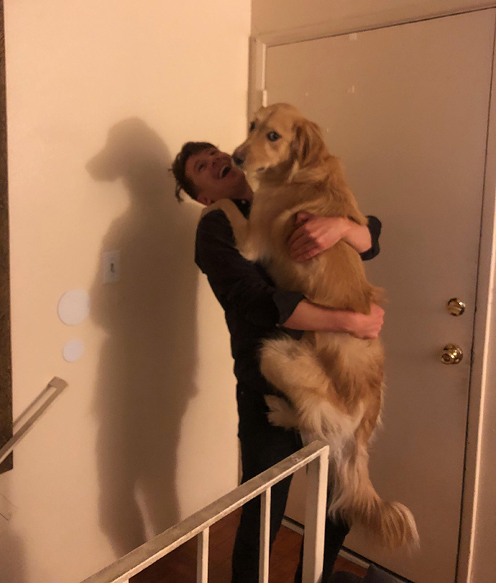 dog long man shadow