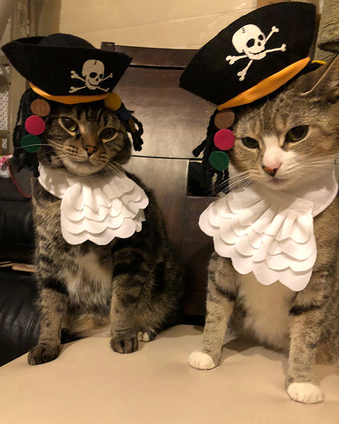 pirate cats