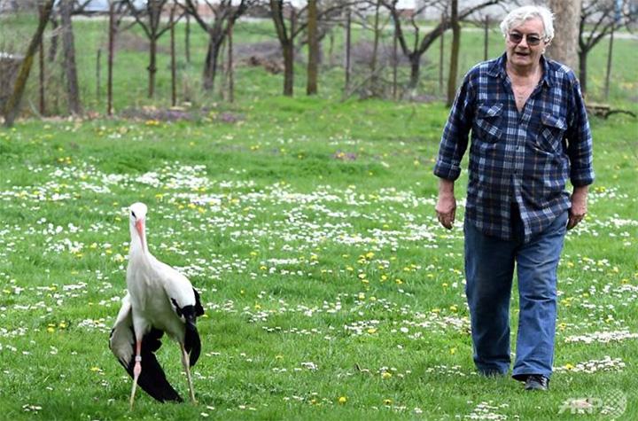 stork love story