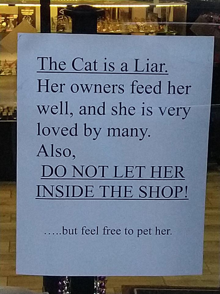 cat is a liar