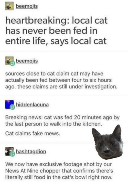 cat is a liar never been fed
