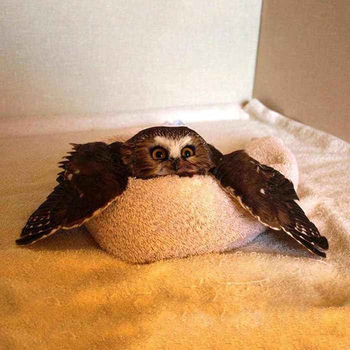 owl in a towel