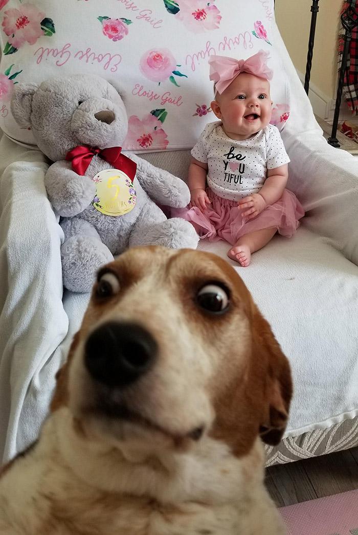 dog photobombs baby pic