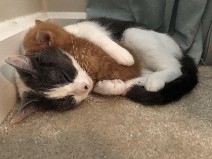 cat loves new kitten