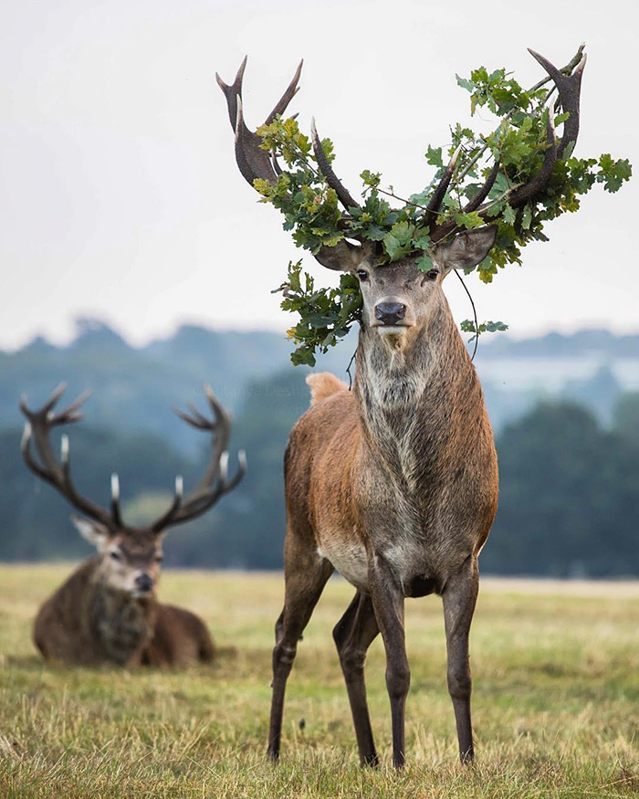 deer king of the forest