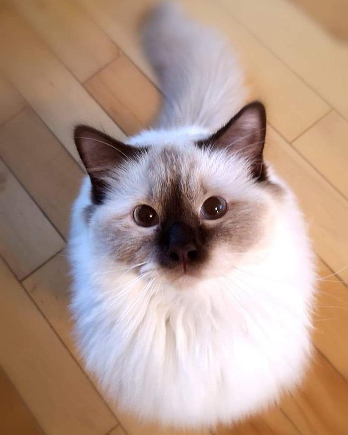 darwin cat