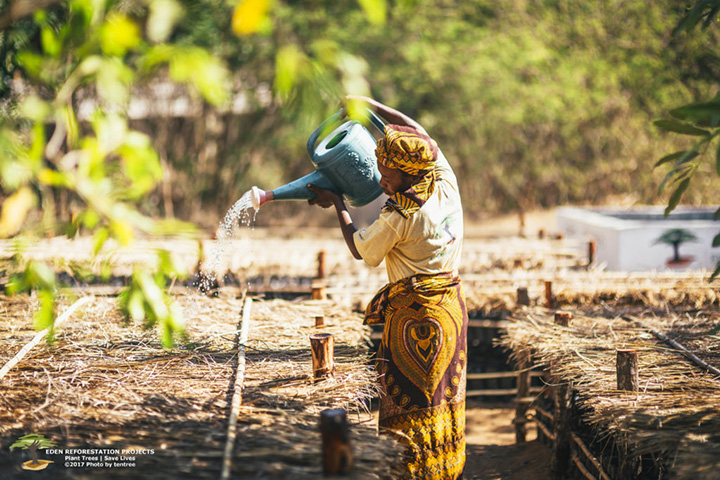 nonprofit plants 250 million trees
