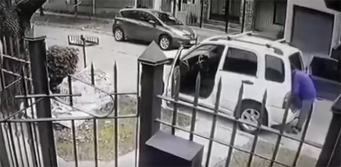 dogs save owner from armed robbers
