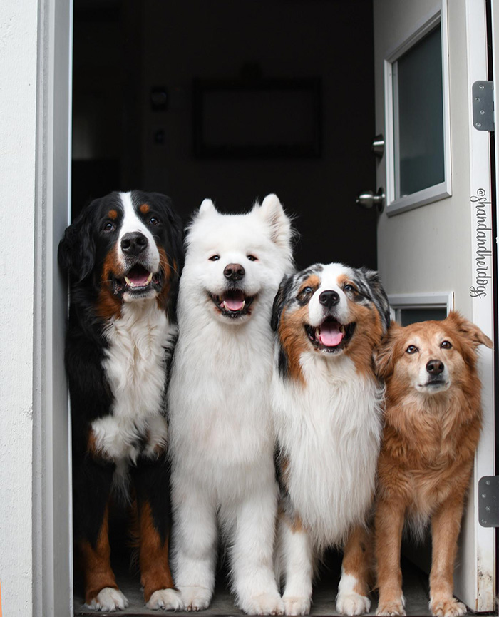 dogs welcome home