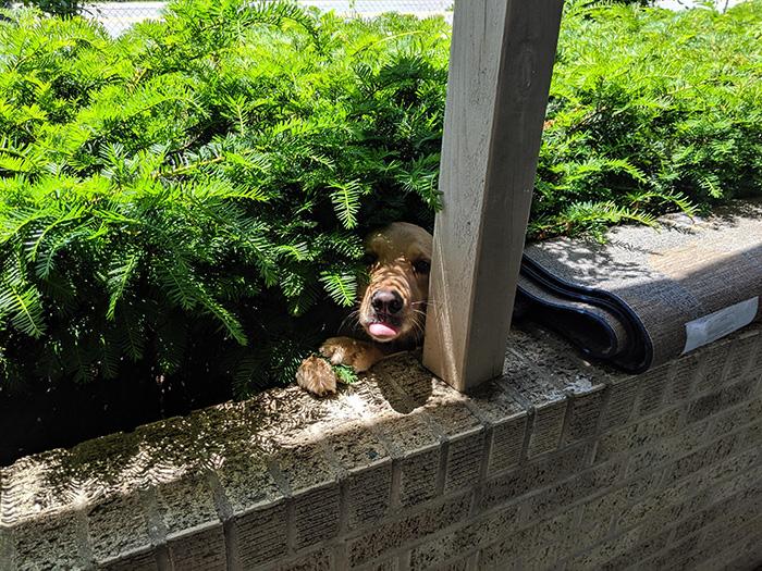 dog says hi from bushes