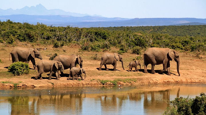 zero elephant deaths by poachers Africa