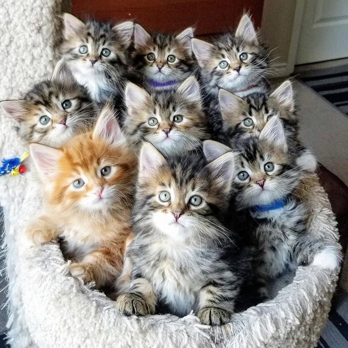 kittens all looking at the camera