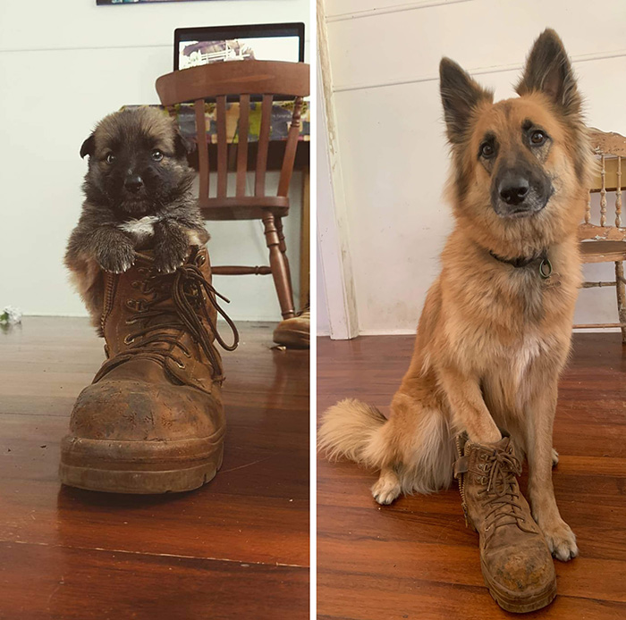 dog 3 years later boot