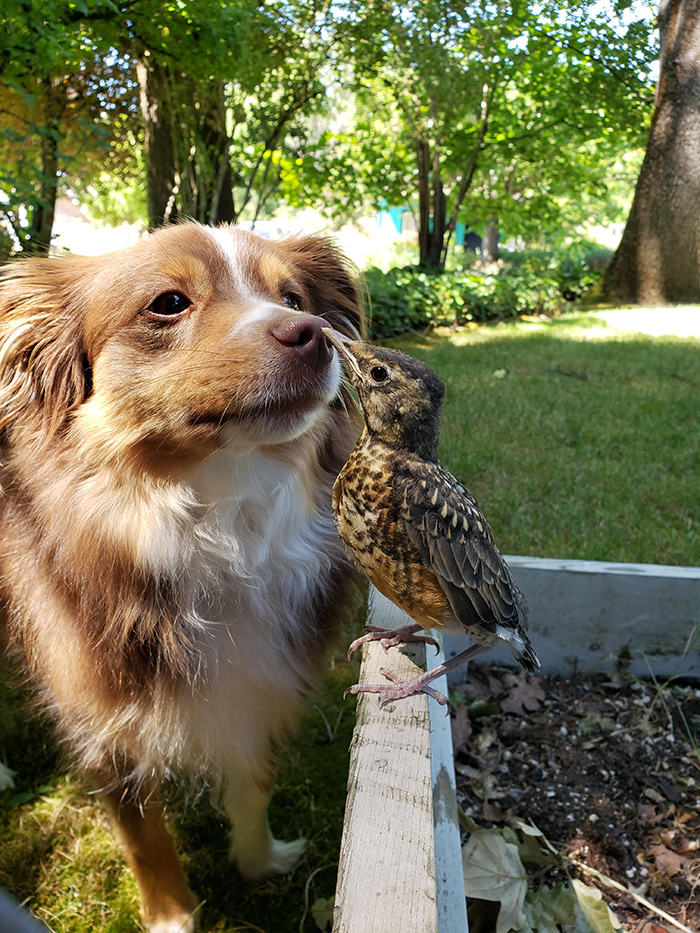 dog and bird become friends