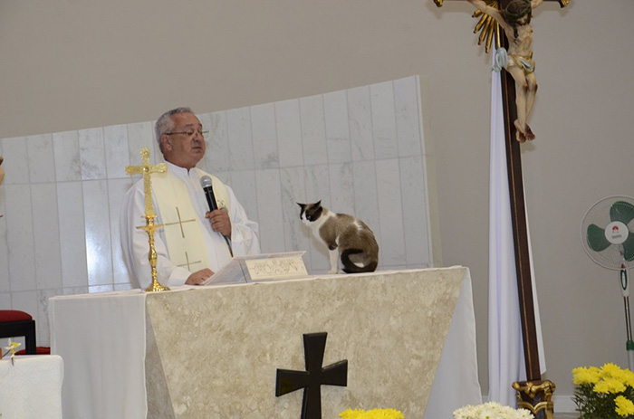 stray cat adopted by church