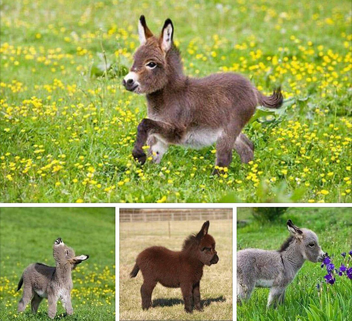 little donkeys