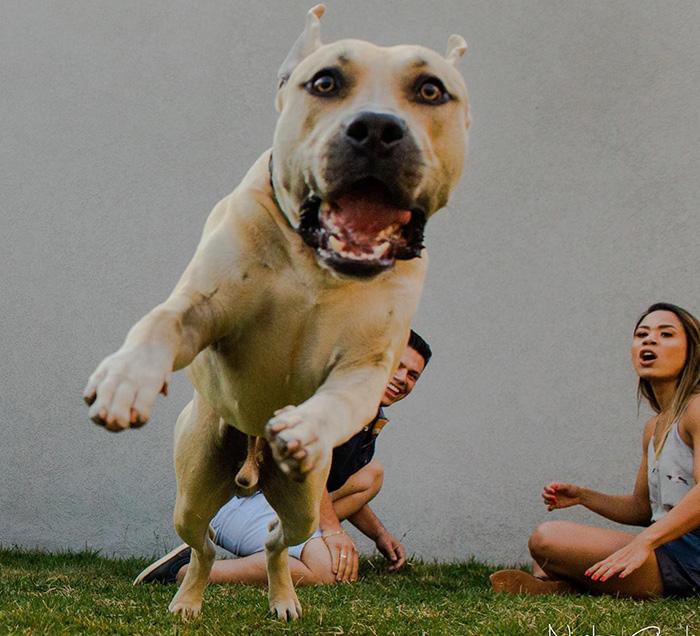 dog photobombs engagement shoot