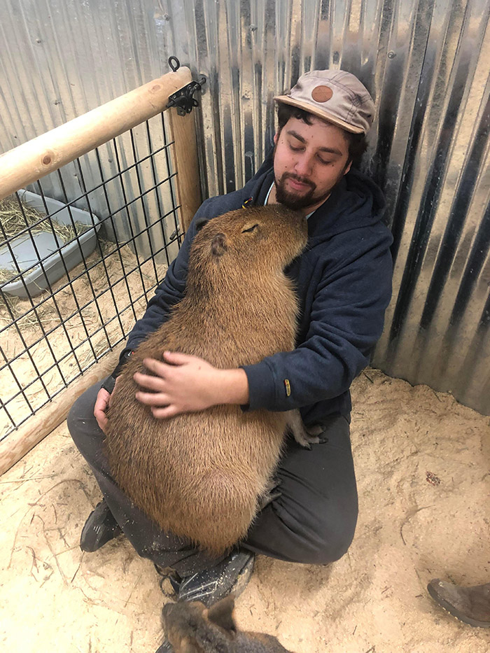 man snuggles capybara
