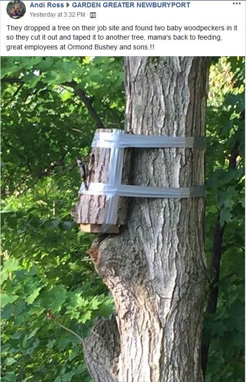 woodpecker nest duct tape