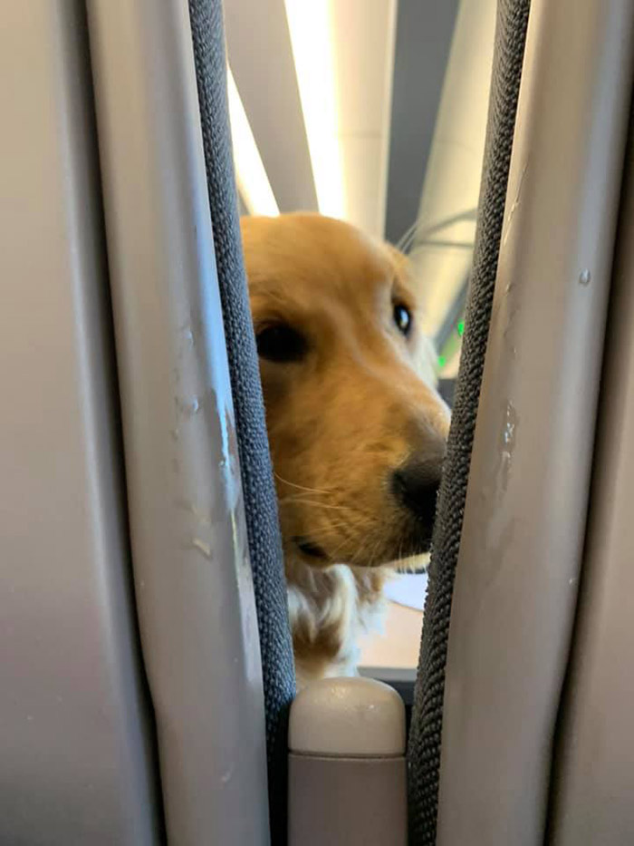 dog makes faces on a plane