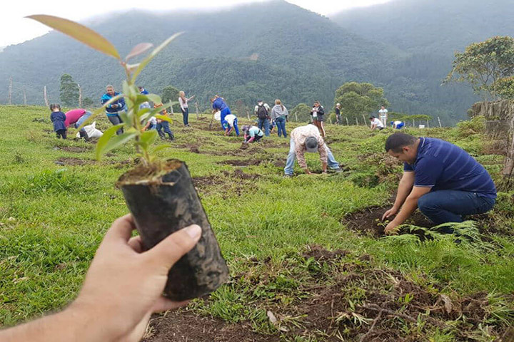 colombians plant 200 thousand trees one day