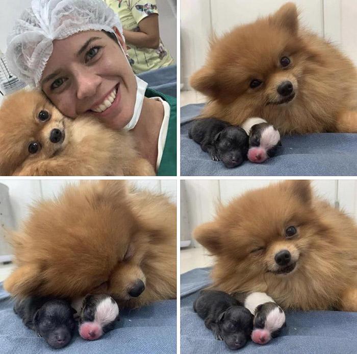 dog mother