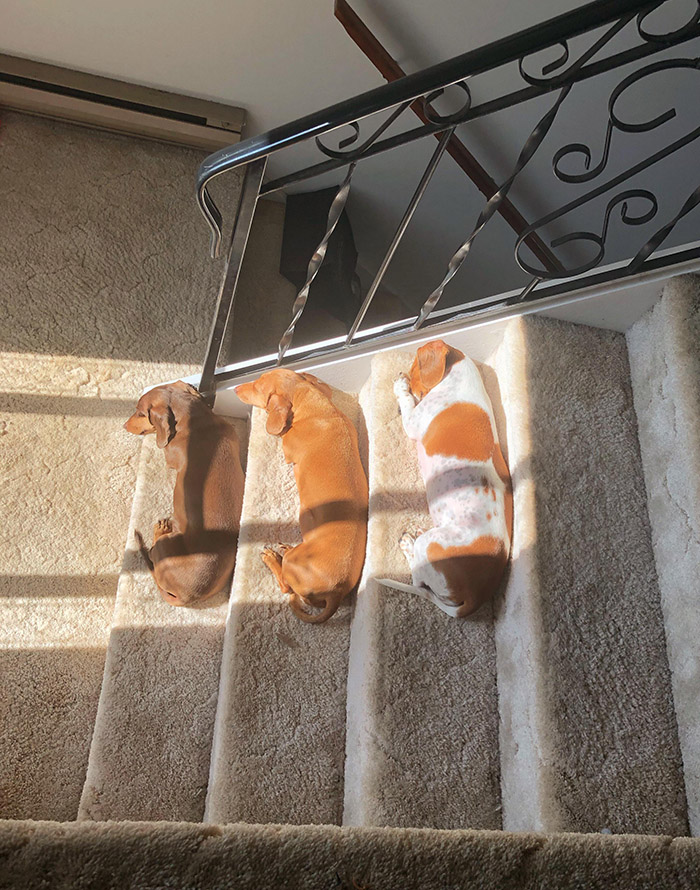 dogs nap on stairs sun