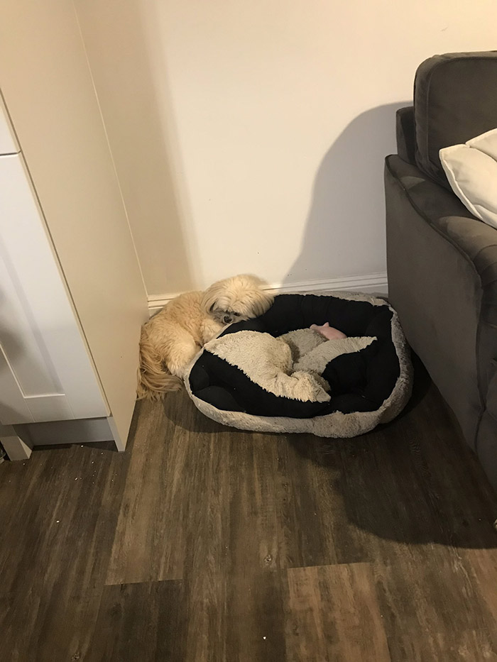 dog sleeps next to bed