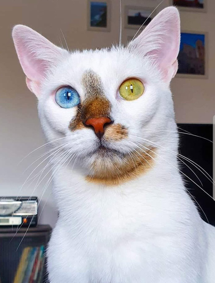 unique cat