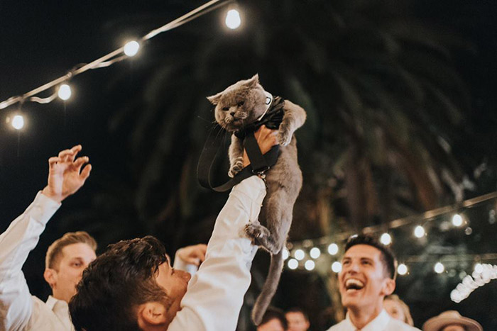 cat best man wedding