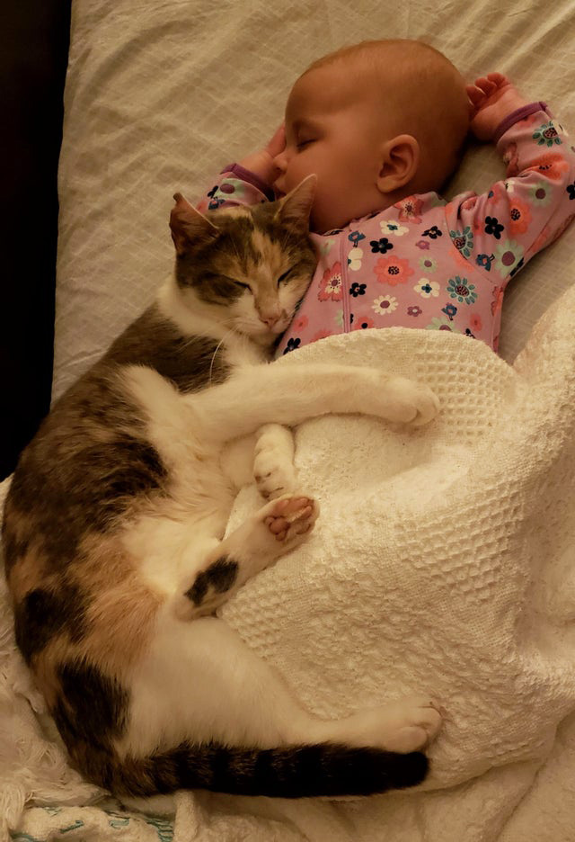 cat naps with baby