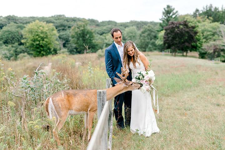deer photobombs wedding