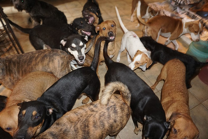 97 dogs in home hurricane