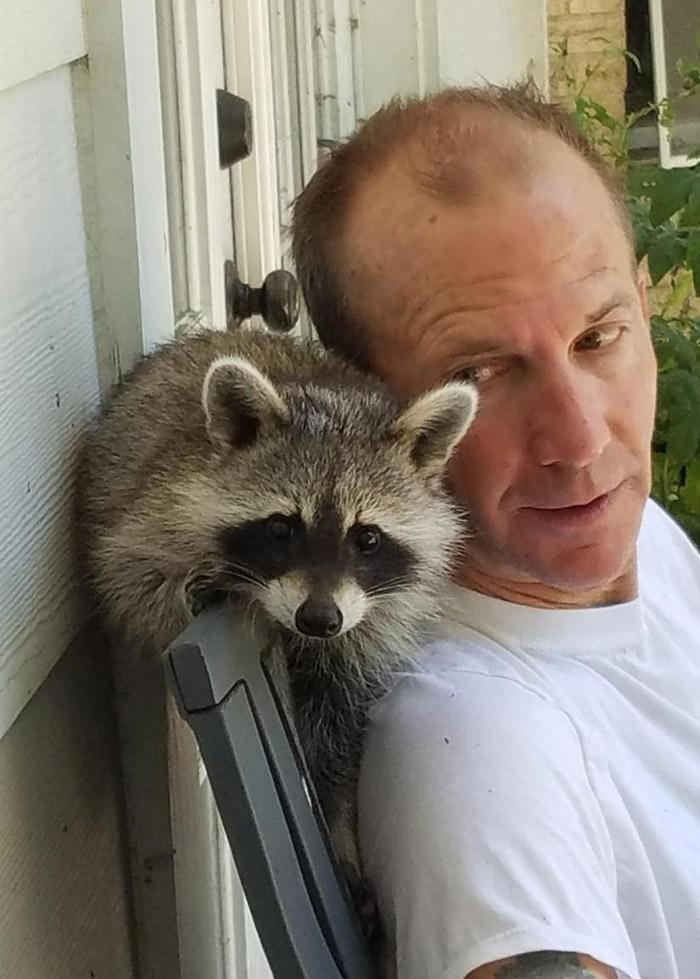 raccoon best friend