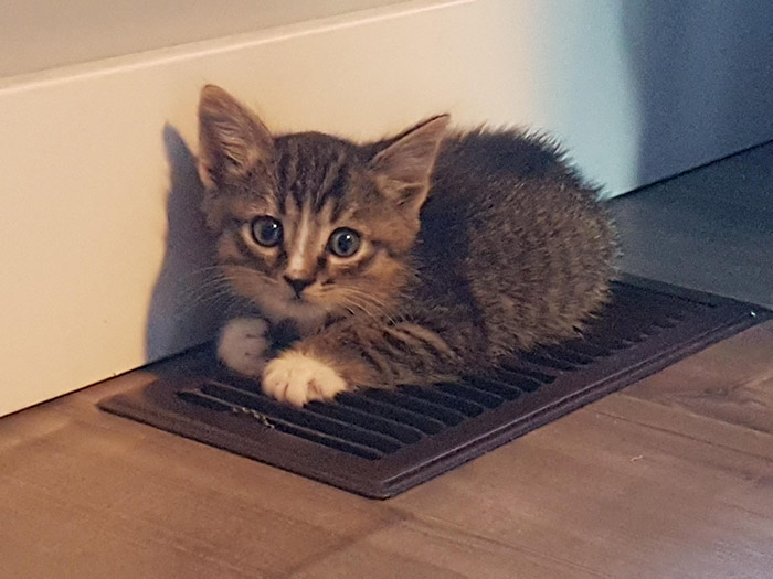 cat found heat vent