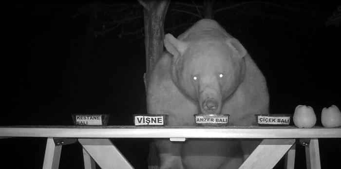 bear honey test