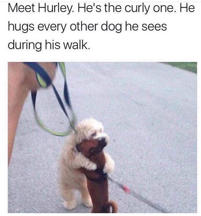 hurley hugs dogs