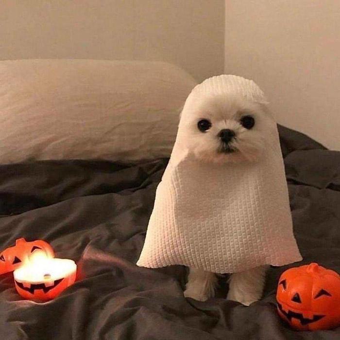 dog preparing for halloween