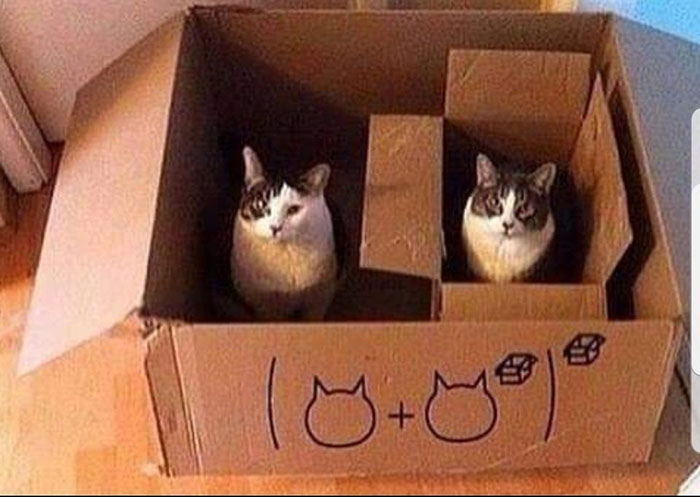 cat math boxes