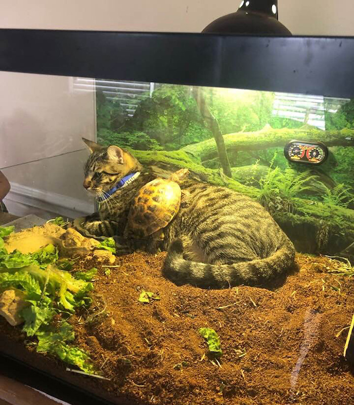 cat and turtle