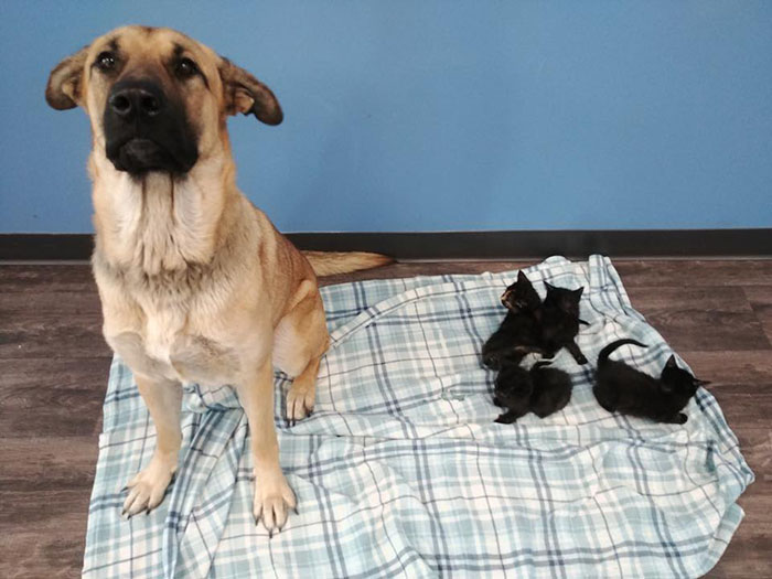stray dog protecting kittens