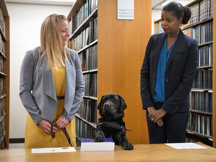 dog to provide support for sexual assault victims