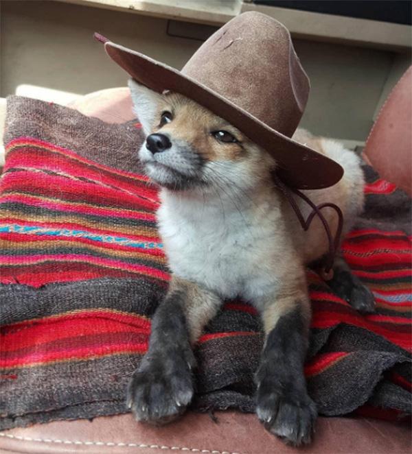 fox cowboy hat