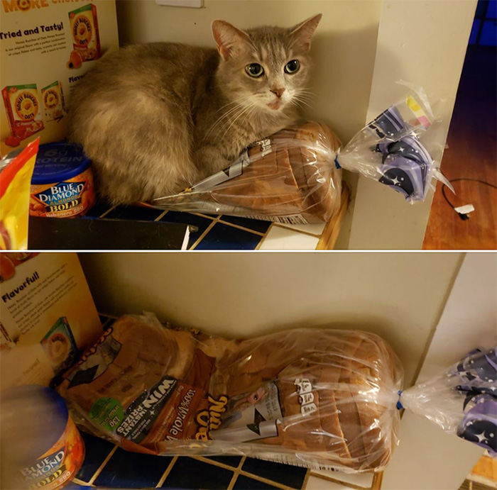 cat sitting on bread