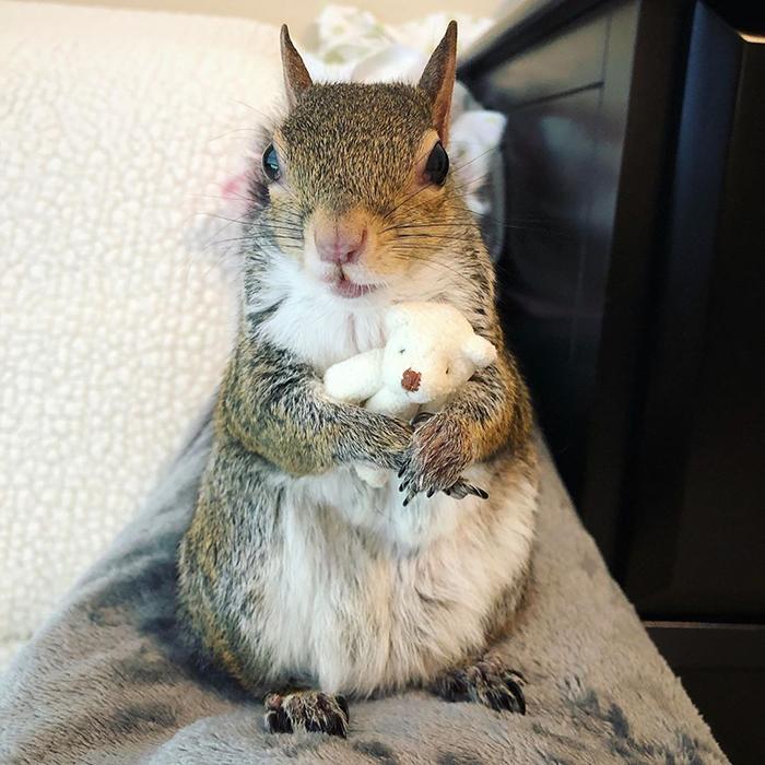 rescued squirrel with teddy bear