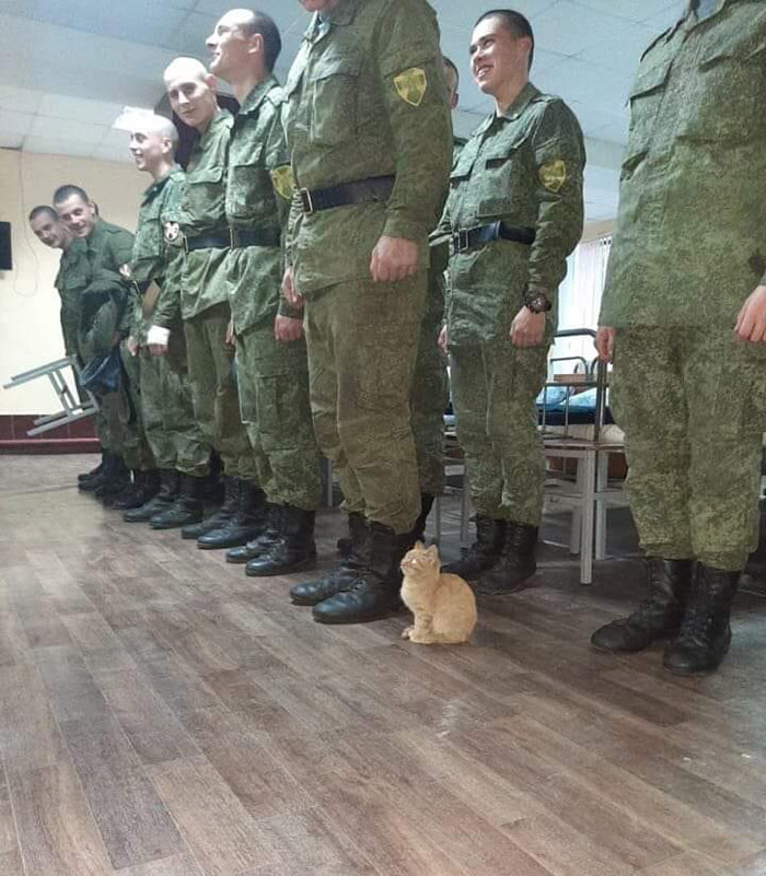 kitten in army line up