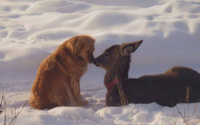 deer and dog kiss