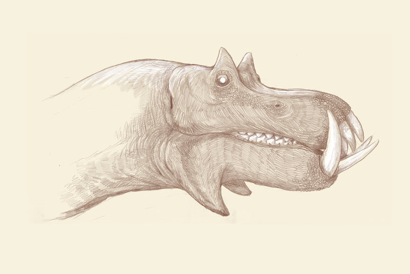 [Image: 98hq1-hippo.jpg]