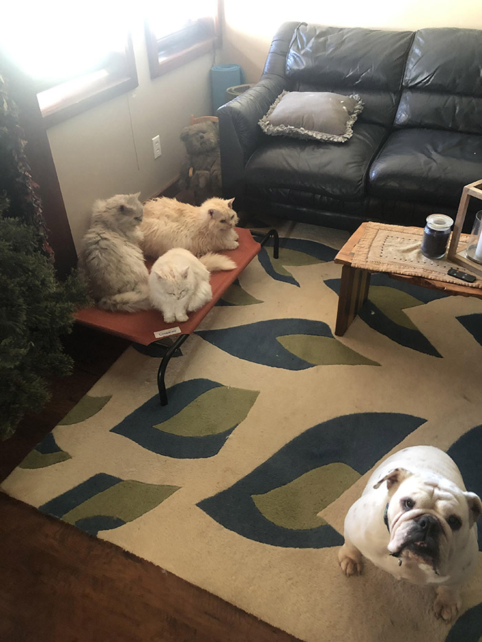 cats in dog bed